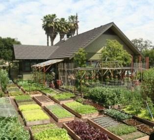 Creative ideas for a better backyard 37