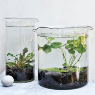 Simple ideas for adorable terrariums 06