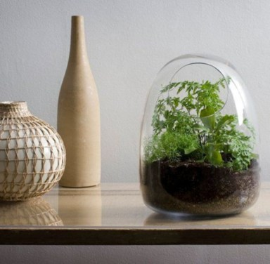 Simple ideas for adorable terrariums 16