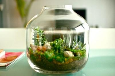 Simple ideas for adorable terrariums 23