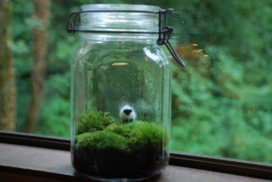 Simple ideas for adorable terrariums 38