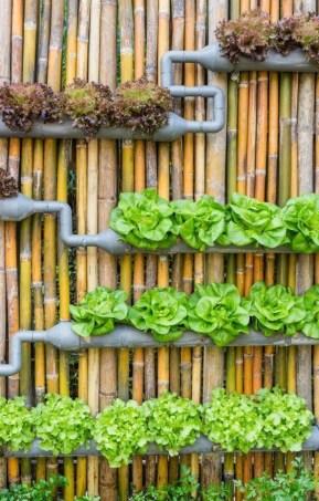 Inspiring vertical garden ideas for your small space 29