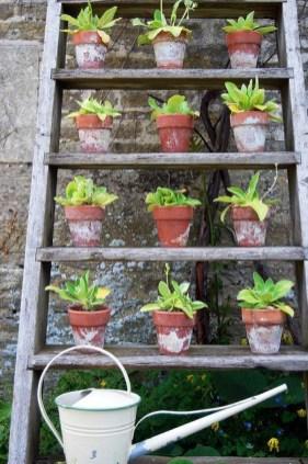Inspiring vertical garden ideas for your small space 50