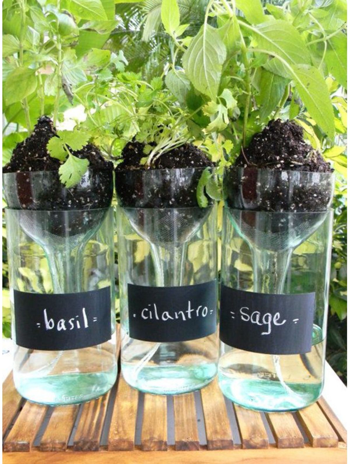 Wine bottles herb garden Unexpectedly Aesthetic DIY Wine Bottle Crafts That Magically Shining