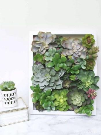 Wonderful succulent in a box