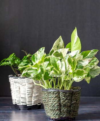 Woven planters Pretty Fresh DIY Planters You Can Create From Scratch Or Recycled Materials