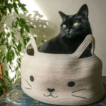 Creative and fun cat bed