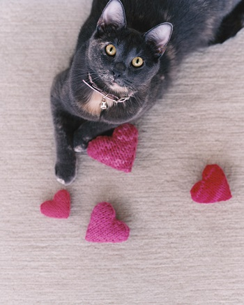 4 Super Cute and Lovely DIY Cat Toys That You Can Make On Your Own