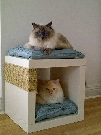 7 Best DIY Toys For Cats That You Can Make Using Everything In Your House