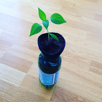 One cut soda bottle self-watering planter Crafting DIY Self-Watering Planters You Can Do