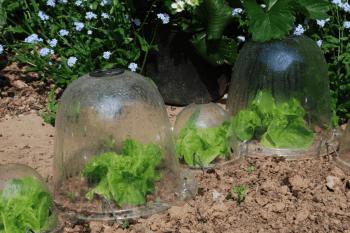 Diy bell jars garden cloche