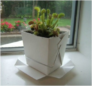 Diy chinese takeout container seed pods
