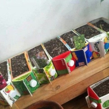 Diy upcycled juice carton seed pods
