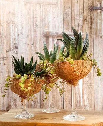 Coconut shell terrarium DIY Tabletop Centerpiece Of Succulent In Wine Glasses