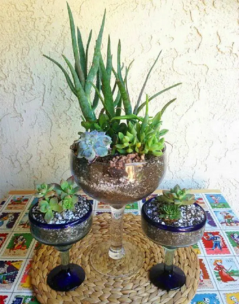 Succulents in margarita glasses DIY Tabletop Centerpiece Of Succulent In Wine Glasses