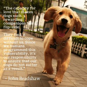A lovely quote and reminder on dogs by John Bradshaw