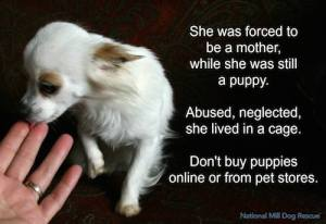 Buying vs adopting a dog: Don't ever buy puppies online or from stores, please!