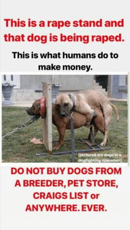 Buying vs adopting a dog, you decide! A 'DOG RAPE STAND', where the dog is being raped to mint out puppies that can be sold by 'the so called humans'!