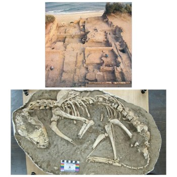 Dog burials excavated at Ashkelon