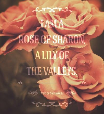Song of Solomon 2:1 I [am] the rose of Sharon, [and] the lily of the valleys.
