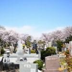 桜が満開の霊園風景