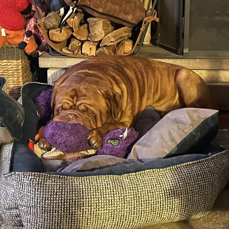 Purple Furballz Toy