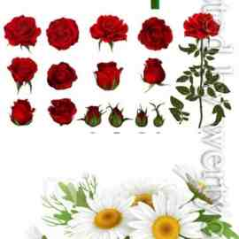 Beautiful flowers in vector Free Download