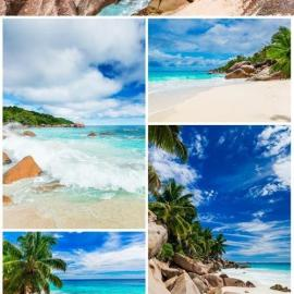 Palm trees and rocks by the sea stock photo Free Download