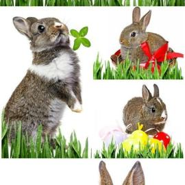 Rabbits on white background stock photo Free Download