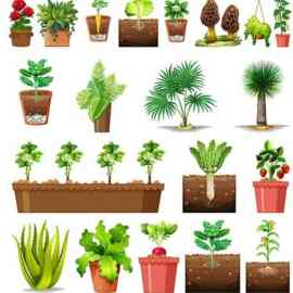 Set of different plants pots isolated Free Download