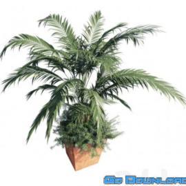 Kentia palm Free Download