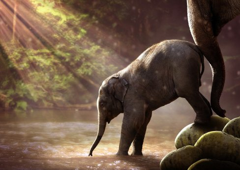 elephant, young, watering hole