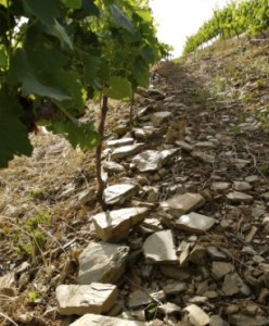 vineyards_winemaking1