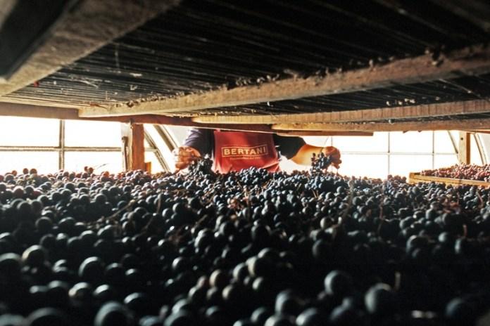 Bertani - Uva sui graticci_low