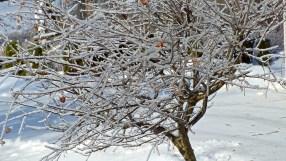 Oh Christmas Tree 227 - Version 2