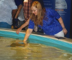 English teacher Rebecca Struble petting a string ray at the New England Aquarium in Boston, Massachusetts.