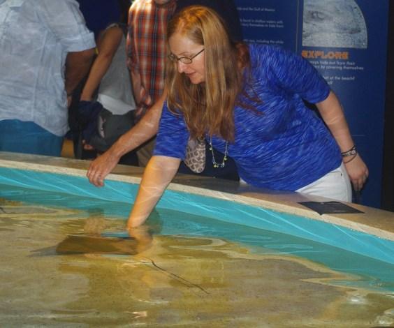 English teacher Rebecca Struble petting a string ray at the New England Aquarium in Boston, Massachusetts.