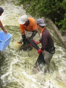 volunteer at shrimp farm in ecuador