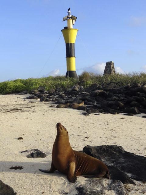 Galapagos sea lions in front of light house
