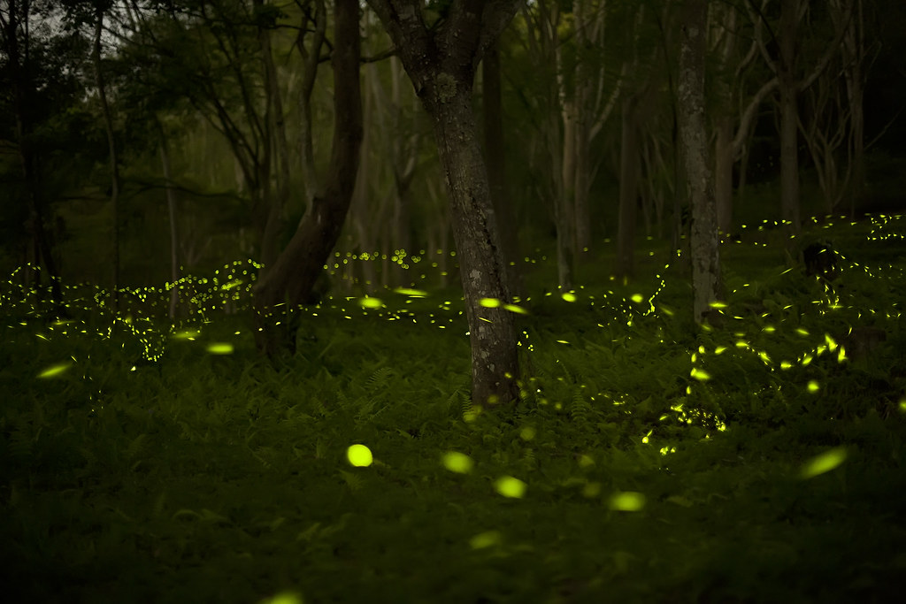 photo of fireflies