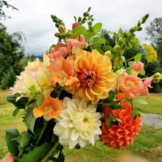 Dahlia Bouquet at Goebel Hill Farm