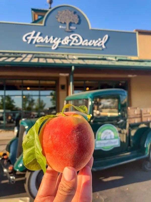 Peachpalooza at Harry & David in Medford, Oregon