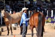 Beautiful, shiny horses