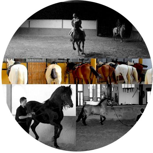 Clases-de-equitaacion-circulo-grande