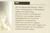 freiburg048