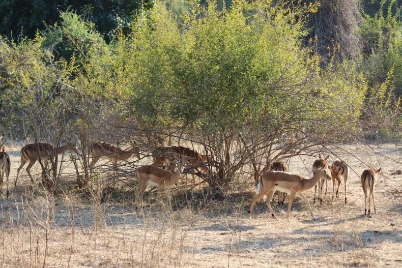 antelope on our jeep safari