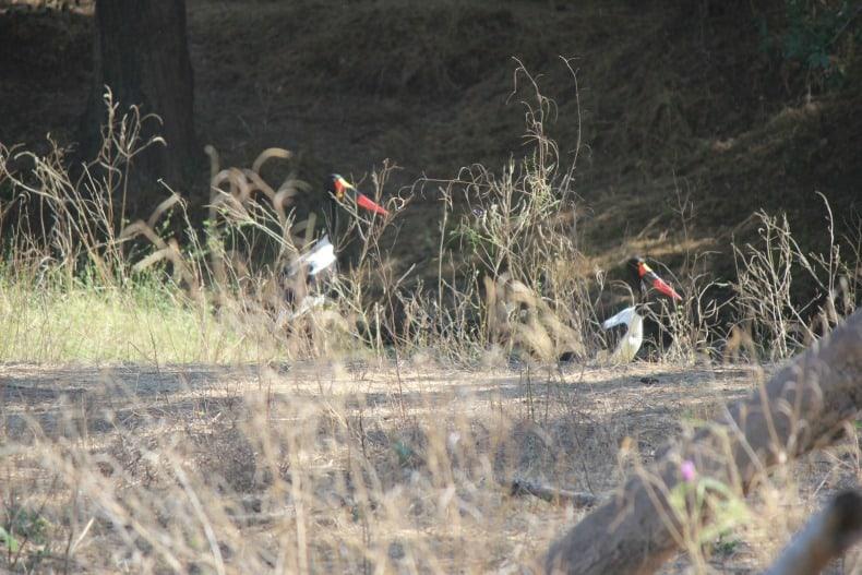 Birds on our canoe safari