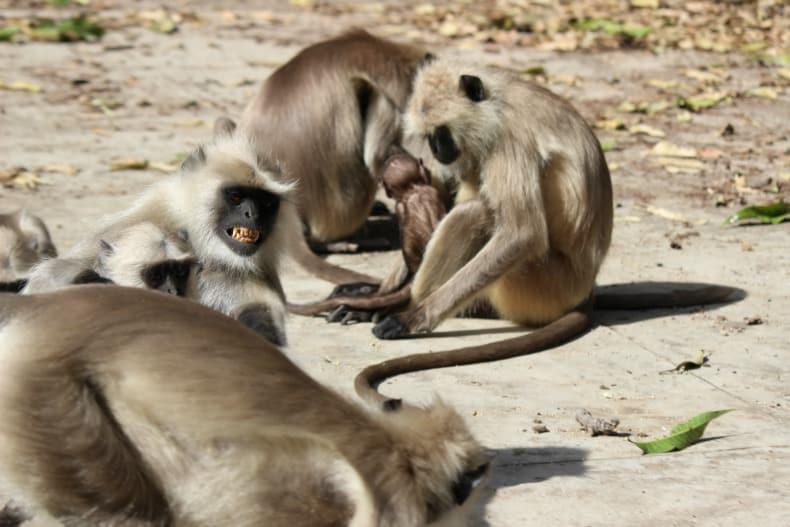 Ranthambore National park, Sher Bagh, tiger, India, safari