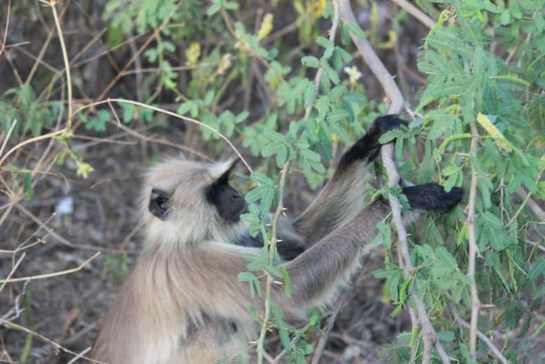 Sher Bagh, Ranthambore safari, tiger safari, india, Ranthambore national Park