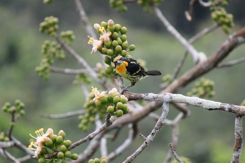 Napo Wildlife Center in Ecuador